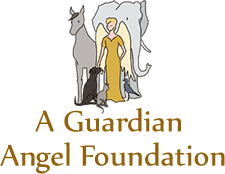 A Guardian Angel Foundation